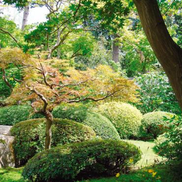 aménagement déco jardin arbre