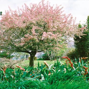 modèle déco jardin arbre