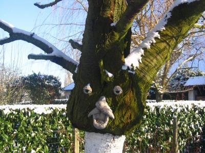 organisation déco jardin arbre