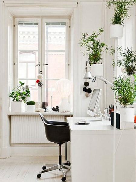 Décoration bureau plantes