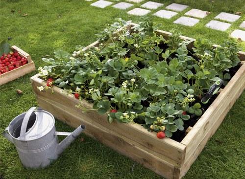 organisation décoration jardin potager